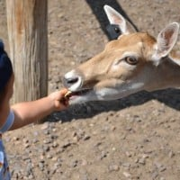 Wisconsin Deer Park Kid friendly feed deer trip travel vacation