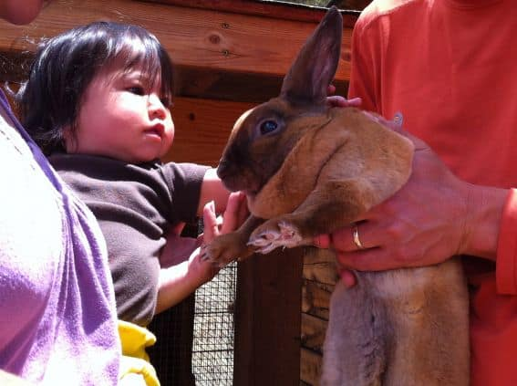 Meet the Bunnies at Tarryall River Ranch