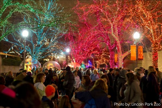 Lights Spectacular at the Lincoln Park Zoo in Chicago, IL Photo by Lincoln Park Zoo