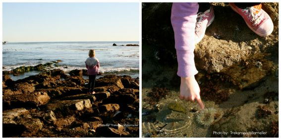 Laguna Beach Heisler Park tide pools family friendly