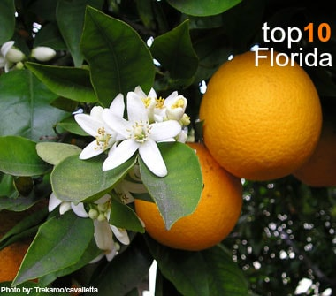 Top 10 things to do with families in Florida: Orange Blossom  Photo by: Trekaroo/cavalletta