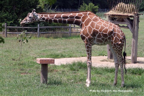 The Jersey Cape: 6 Family Friendly Activities: kid friendly activity, Cape May Zoo  Photo by: Flickr/Jim,the Photographer