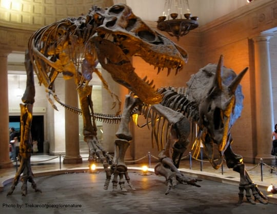 California Dinsosaur Encounters & Digs for Families and Kids: Natural History Museum Los Angeles Photo by: Trekaroo/goexplorenature