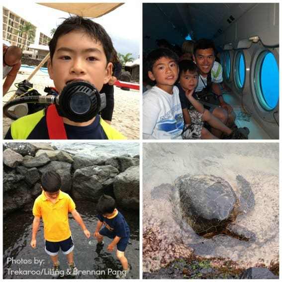 Big Island Ocean Life