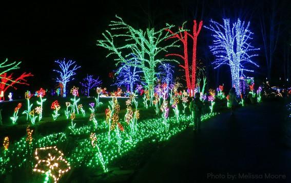 Meadowlar Gardens Winter Walk of Lights NoVA