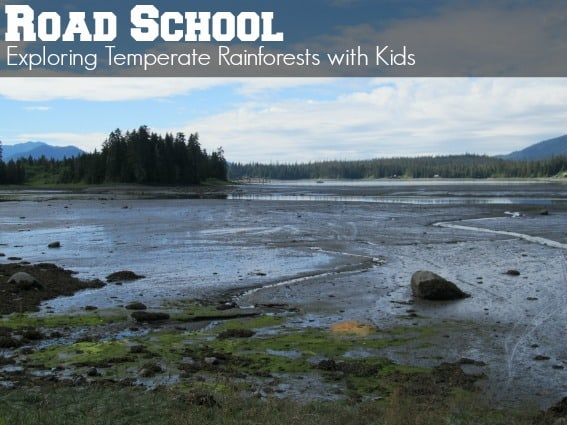 Road School Exploring Temperate Rainforests with kids