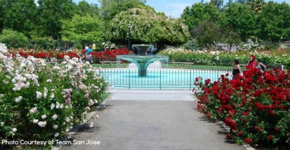 San Jose Rose Garden Neighborhood Hd Pictures
