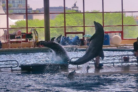 Dolphins National Aquarium Baltimore