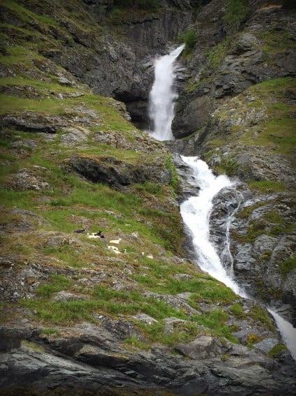 Norway waterfall goats
